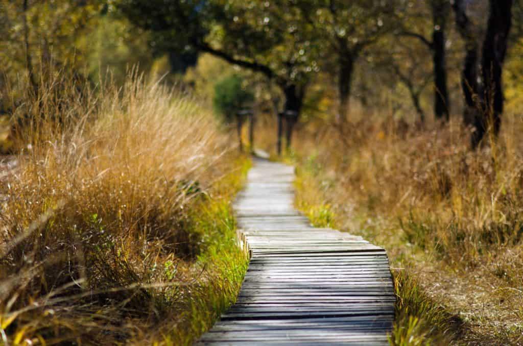Wanderweg durch die Natur